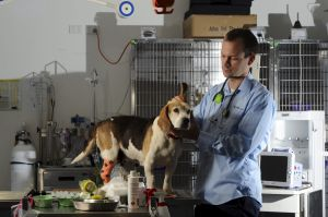 Over worked: Dr Damien Solley, Head of Emergency Services at the Animal Referral Hospital in Yallourn Street, Fyshwick, ...