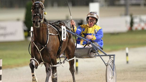 """""""He isn't near the class of The Falcon Strike or Quinny but he can can go a long way"""": Gary Hall jnr."""