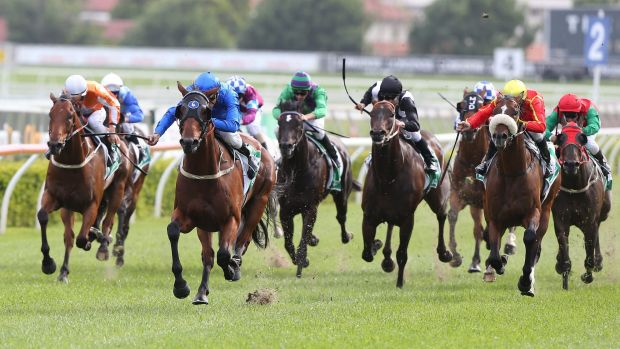 Watch out for the clods: Blake Shinn drives Medcaut home at Randwick on Saturday.