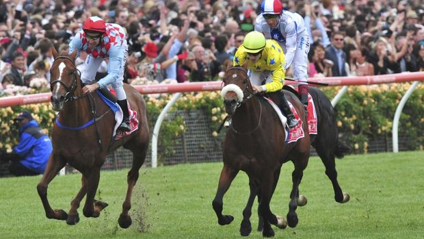 Red Cadeaux, far left, could return to Australia for The Championships at Randwick next autumn.