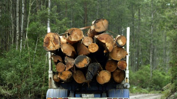 Mountain ash logs leaving the Toolangi State Forest.