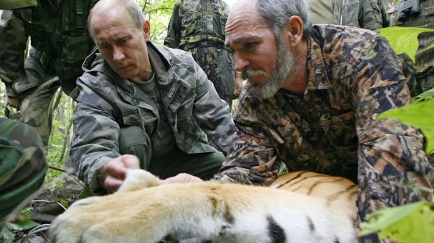 Vladimir Putin, assisted by a scientist, fixing a satellite transmitter onto a tiger during his visit to the Ussuriysky ...