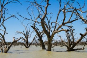 There is much we don't know about water taken from the Murray-Darling Basin's rivers.