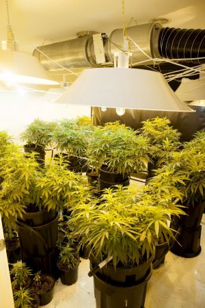 The hydroponic cannabis setup found in one room at a home in Macgregor in 2012.