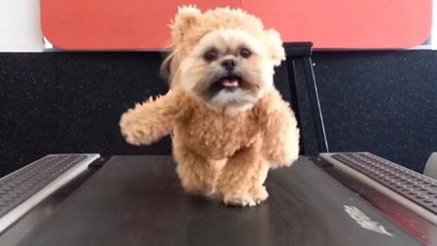Walkies: Munchkin is the latest YouTube star.