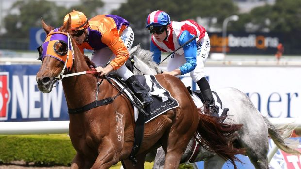 Imposing record: Our Boy Malachi scores at Rosehill for Jay Ford.