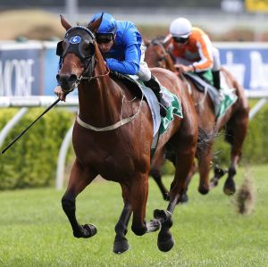 Surface tension: Blake Shinn and Medcaut win on the controversial Kensington track last Saturday.