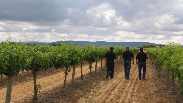 Casella Wines is the maker of Australia's biggest-selling wine, Yellow Tail,