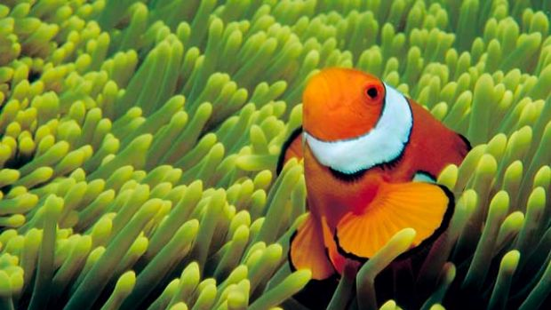 Tony Abbott is turning his back on an area of green policy that the Coalition can claim credit for - marine conservation