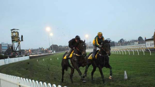 Melbourne Cup hopes Brightnight and Moatize at the track yesterday.