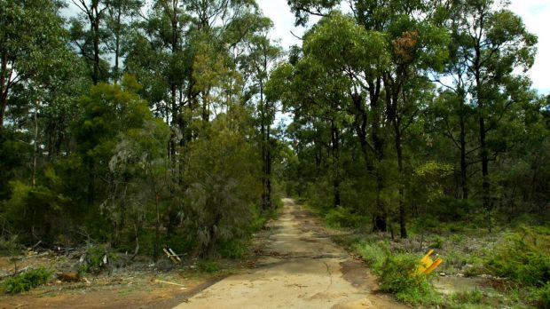 Plans for a bushland track to be used by emergency services vehicles has become a point of contention for Brisbane City ...