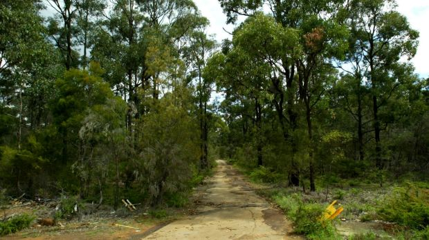 Environmental groups have condemned the review of the state's biodiversity legislation for neutering the office of ...