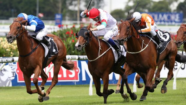 Tight win: Hugh Bowman (red cap) gets Off The Rails home in a photo finish at Rosehill on Saturday.