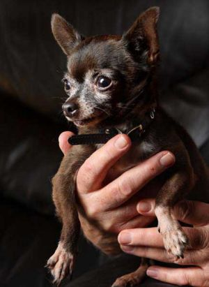 Hilby, another resident of the shelter, located in Frankston. <i>Picture: Ken Irwin</i>
