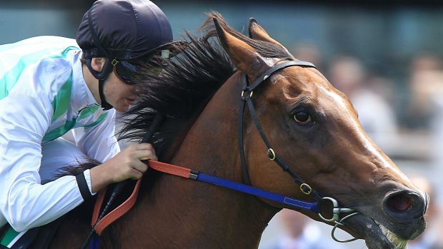 On the cusp of history: Old-timer Monton is chasing a second win in the Villiers Stakes at Randwick on Saturday.