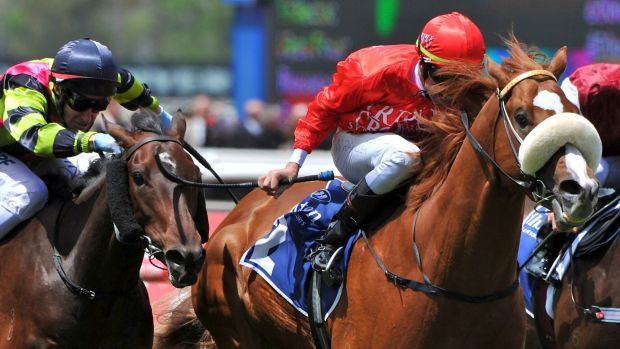 Game of thrones: Gerald Ryan's Dothraki will go head to head with Hawkes Racing at headquarters on Saturday.