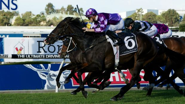 Test of timing: Scream Machine will tackle the Villiers at Randwick on Saturday.