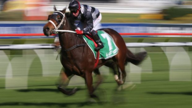 Solid chance: Saigon Tea will feature in the Christmas Cup.