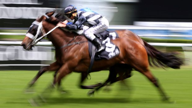 Merry Christmas: Glyn Schofield rides Saigon Tea  to victory in the Christmas Cup at Randwick on Saturday.