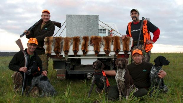 Wayne Hogan, Andy Mallen, David Mills and Steve Ballas (standing) with their pointer dogs and nine foxes, flushed from ...