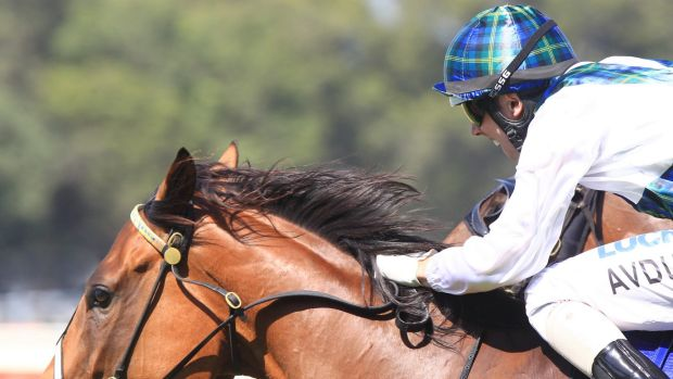 All revved up: Red Excitement wins for Brenton Avdulla in February.