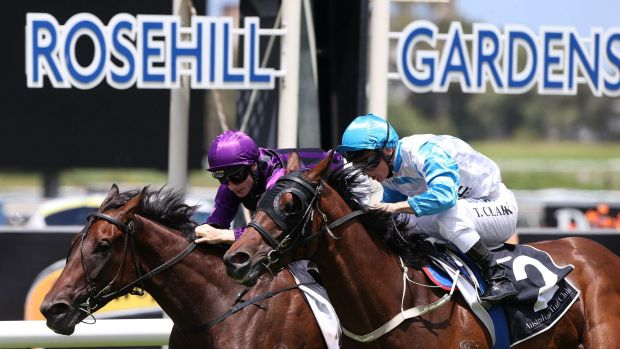 Last-minute drama: Tim Clark wins at Rosehill on Testashadow.