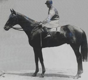 Fine steed: 1920 Melbourne Cup and 1917 Summer Cup winner Poitrel.