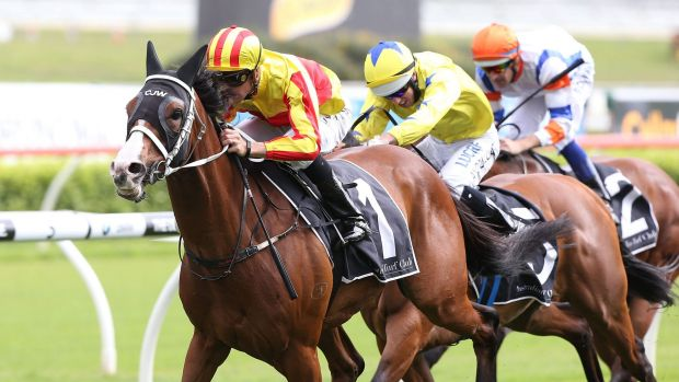 Golden oldie: Tye Angland cruises home on  I'm Imposing  at Royal Randwick.