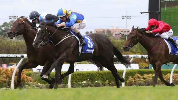 Sweet sounds: Hugh Bowman (blue and yellow) rides Music Magnate to victory at Canterbury on Saturday.