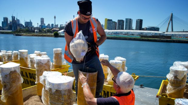 Big bangs: Mortars are prepared on barges at White Bay ahead of New Year's Eve fireworks celebrations.