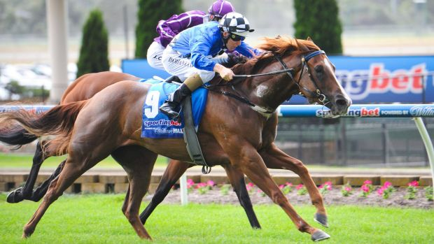 Damian Lane guides Wild Rain to victory in the Slickpix Handicap at Moonee Valley on Saturday.