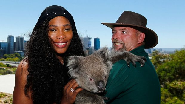 Serena Williams meets Sunshine the koala with handler Steve Gillam from Caversham Wildlife Park at Kings Park.
