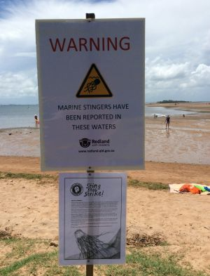 Redland City Council erected signs at Wellington Point alerting swimmers to the venomous Irukandji Morbakka fenneri, ...