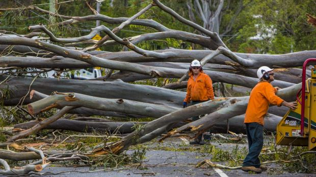 Storm damage in Toowong from the storm that hit Brisbane on November 28, 2014.