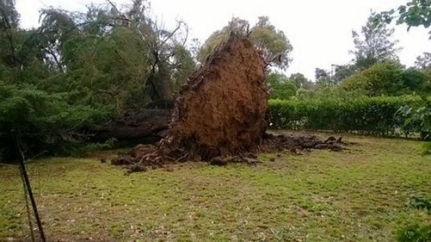 Strong winds uprooted a tree in Somerville, in Melbourne's east.