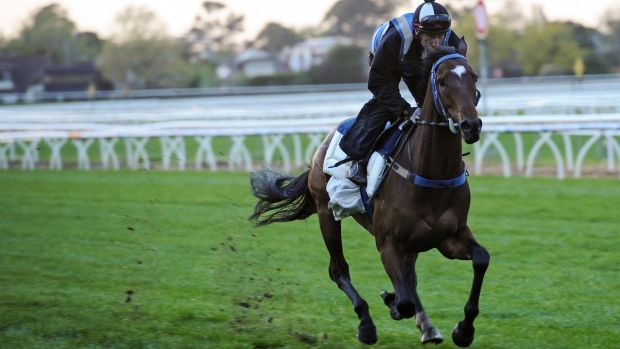 Lidari during a trackwork session in October last year.