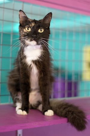 Mittens is hoping to find her forever home soon.