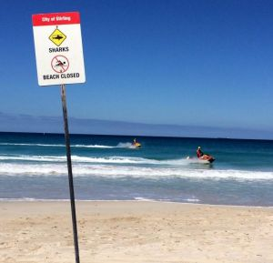 Does the fear of a potential shark attack stop you from taking a dip?