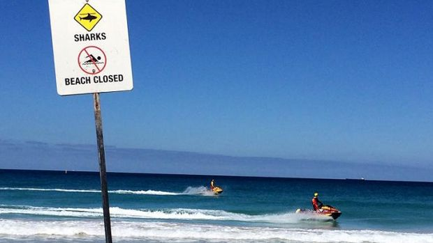 Four Perth beaches, including Scarborough, have been closed by shark sightings.