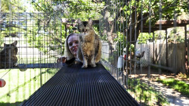 Victoria Worley, of Kingston, keeps her four cats safe in an enclosure attached to her house.