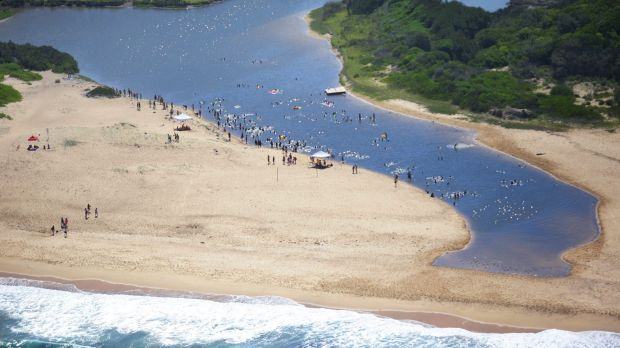 Swimmers avoid Burwood Beach where a shark was spotted, opting for the nearby lagoon instead.