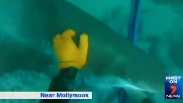 Close encounter: The shark bites the spear and Sam Smith's hand.
