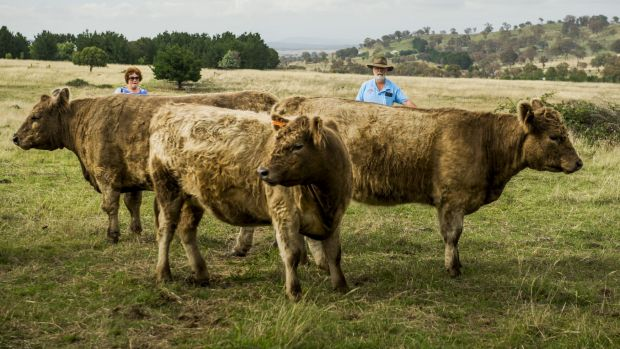 Galloway cattle farmers Chris and Greg Stuart at Minto, near Hall.