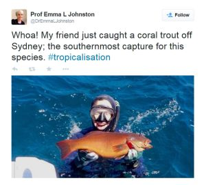 A Twitter image posted by Professor Emma L Johnston showing her friend catching a coral trout off Sydney.