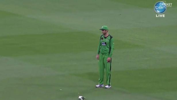 Rob Quiney stands near the bird as it lies prostrate on the MCG.