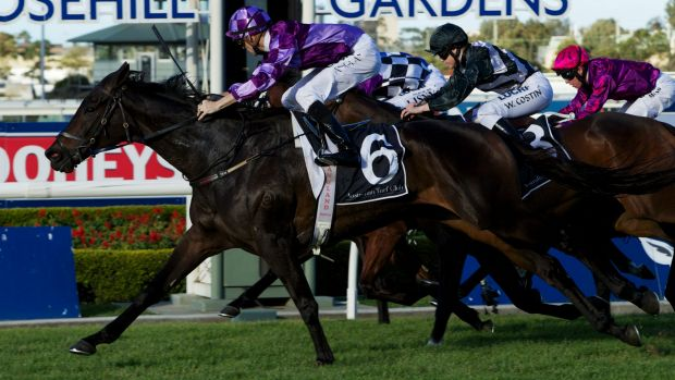 Dream machine: Jason Coyle's six-year-old is chasing group 1 success.