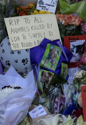 The vigil outside the Lost Dogs' Home in North Melbourne.