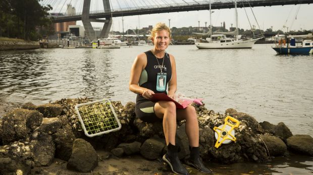 """Gardening: Marine Ecology student Rebecca Morris with marine """"flowerpots"""" used for increasing biodiversity for the ..."""
