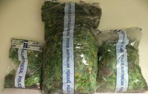 Cannabis removed from Uriarra Forest.