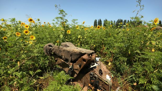 Seeds of hope: Part of the MH17 wreckage among sunflowers in Ukraine.